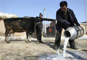 A farmer pours away milk at a cattle farm in Changchun